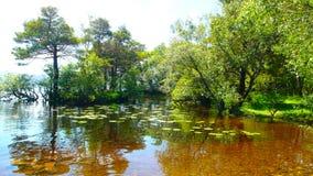 Αντανάκλαση των πράσινων δέντρων στο νερό Στοκ Εικόνα