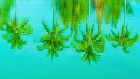 Αντανάκλαση φοινικών καρύδων σε μια λίμνη απόθεμα βίντεο