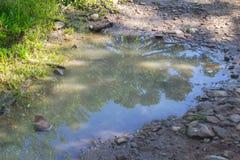 Αντανάκλαση angustifolia αροκαριών Στοκ εικόνες με δικαίωμα ελεύθερης χρήσης