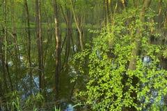 Αντανάκλαση midwest στο δάσος στοκ εικόνα