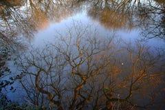 Αντανακλάσεις δέντρων Στοκ Φωτογραφία
