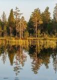 Αντανακλάσεις δέντρων Στοκ φωτογραφίες με δικαίωμα ελεύθερης χρήσης
