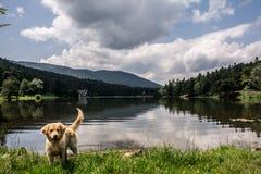 Αντανακλάσεις στη λίμνη και ένα κουτάβι στοκ φωτογραφία με δικαίωμα ελεύθερης χρήσης