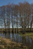 Αντανακλάσεις των δέντρων στο νερό Στοκ εικόνα με δικαίωμα ελεύθερης χρήσης