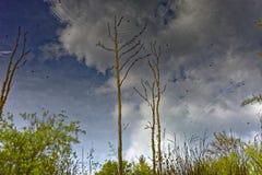 Αντανακλημένοι φύση και ουρανός στην επιφάνεια νερού Στοκ Εικόνες