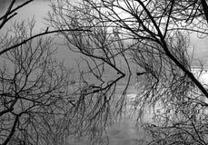 Αντανακλάσεις κλάδων Στοκ Φωτογραφίες