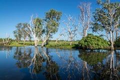Αντανακλάσεις μπλε ουρανού και δέντρων στον ποταμό, Kakadu Στοκ εικόνα με δικαίωμα ελεύθερης χρήσης