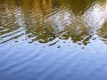 Αντανακλάσεις νερού μπλε χρυσός Στοκ εικόνα με δικαίωμα ελεύθερης χρήσης