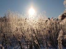 Αντανακλάσεις του ήλιου Στοκ Φωτογραφία