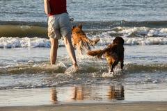 Αντανακλάσεις των σκυλιών στην κυματωγή Στοκ Φωτογραφίες