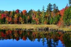 Αντανακλάσεις φθινοπώρου Στοκ Εικόνες