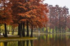 Αντανακλάσεις φθινοπώρου Στοκ Φωτογραφίες
