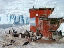 ανταρκτική ομάδα penguin Στοκ Φωτογραφίες