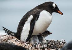 Ανταρκτική το χειμώνα Στοκ φωτογραφίες με δικαίωμα ελεύθερης χρήσης