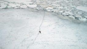 Ανταρκτική penguin που τρέχει στο χιόνι, έδαφος πάγου απόθεμα βίντεο