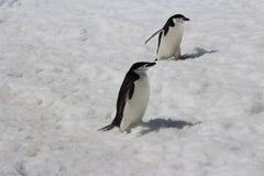 Ανταρκτική - Penguins Στοκ εικόνες με δικαίωμα ελεύθερης χρήσης