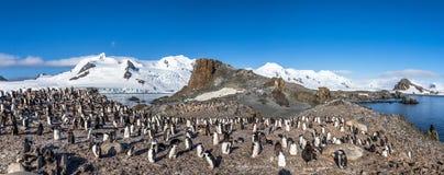 Ανταρκτικό πανόραμα με τις εκατοντάδες του chinstrap penguins συσσωρευμένο ο Στοκ Φωτογραφία
