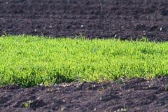 Αντιθέσεις στο καλλιεργήσιμο έδαφος Στοκ Φωτογραφίες