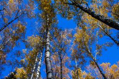 Αντιθέσεις του φθινοπώρου στις φωτογραφίες στοκ εικόνες
