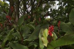 αντιθέσεις Φύση, λουλούδια και πόλη στοκ εικόνες