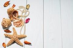 Αντικείμενα θάλασσας - κοχύλια, αστέρι θάλασσας, μαργαριτάρια Στοκ εικόνες με δικαίωμα ελεύθερης χρήσης