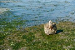 Αντικείμενο στην ακτή στοκ φωτογραφία με δικαίωμα ελεύθερης χρήσης