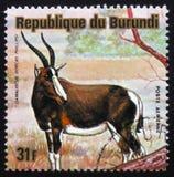 Αντιλόπη bontebok (pygargus Damaliscus), ζώα Μπουρούντι σειράς, Στοκ εικόνα με δικαίωμα ελεύθερης χρήσης