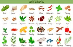 Αντιοξειδωτικά τρόφιμα, χορτάρια και καρυκεύματα Υγιής τρόπος ζωής Έξοχες ανθοκυάνες τροφίμων, διανυσματική απεικόνιση διανυσματική απεικόνιση