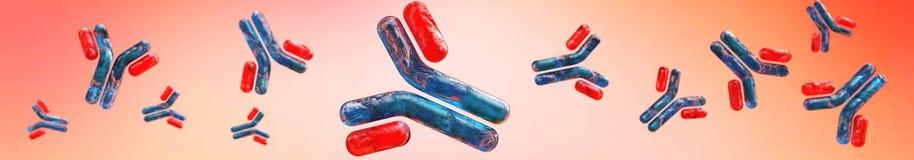 Αντισώματα, ανοσοσφαιρίνες, ο άνοσος απεικόνιση αποθεμάτων