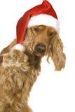 ανυψωμένο σκυλί πόδι στοκ εικόνες