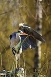 ανυψωτικά φτερά Στοκ φωτογραφίες με δικαίωμα ελεύθερης χρήσης