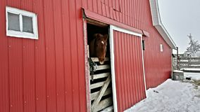 Ανόητο άλογο Στοκ Φωτογραφία