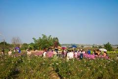 Ανόι, Βιετνάμ - 10 Ιανουαρίου 2016: Συσσωρευμένοι νέοι που παίρνουν τη φωτογραφία στον κήπο λουλουδιών από τον κόκκινο ποταμό Παί Στοκ Εικόνες