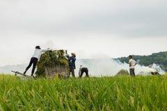 Ανόι, Βιετνάμ - 24 Μαΐου 2015: Ασιατικοί αγρότες που εργάζονται στον τομέα στη συγκομιδή της εποχής στο προάστιο του Ανόι Στοκ εικόνα με δικαίωμα ελεύθερης χρήσης