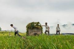 Ανόι, Βιετνάμ - 24 Μαΐου 2015: Ασιατικοί αγρότες που εργάζονται στον τομέα στη συγκομιδή της εποχής στο προάστιο του Ανόι Στοκ Φωτογραφία