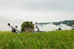 Ανόι, Βιετνάμ - 24 Μαΐου 2015: Ασιατικοί αγρότες που εργάζονται στον τομέα στη συγκομιδή της εποχής στο προάστιο του Ανόι Στοκ φωτογραφίες με δικαίωμα ελεύθερης χρήσης