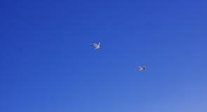 Ανύψωση πουλιών Στοκ φωτογραφίες με δικαίωμα ελεύθερης χρήσης