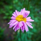 Ανώμαλο λουλούδι Στοκ Εικόνες