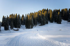 Ανώμαλη να κάνει σκι διαδρομή στο ξύλο Στοκ φωτογραφία με δικαίωμα ελεύθερης χρήσης