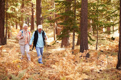 Ανώτερα χέρια λαβής ζευγών που σε ένα δάσος, Καλιφόρνια, ΗΠΑ Στοκ εικόνα με δικαίωμα ελεύθερης χρήσης