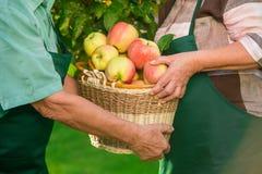 Ανώτερα χέρια και καλάθι μήλων Στοκ εικόνα με δικαίωμα ελεύθερης χρήσης