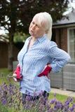 Ανώτερη γυναίκα που πάσχει από τον πόνο στην πλάτη ταυτόχρονα καλλιεργώντας στο σπίτι Στοκ Φωτογραφίες