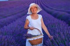 Ανώτερη γυναίκα στους τομείς lavander Στοκ Εικόνα