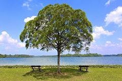 Ανώτερη δεξαμενή Seletar στοκ εικόνες