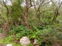 Ανώτερη επιφύλαξη φύσης βράχου του Γιβραλτάρ στοκ εικόνες με δικαίωμα ελεύθερης χρήσης