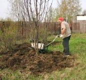 ανώτερη εργασία κηπουρών Στοκ Φωτογραφία