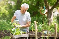 Ανώτερη κηπουρική ατόμων στοκ εικόνα
