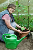 Ανώτερη κηπουρική γυναικών Στοκ Φωτογραφία