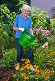 Ανώτερη κυρία Watering τα λουλούδια της στον κήπο στοκ εικόνα με δικαίωμα ελεύθερης χρήσης