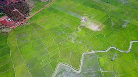 Ανώτερη φυτεία ρυζιού άποψης μεγάλη με το μικρό ποταμό φιλμ μικρού μήκους